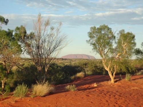 Uluru 26 01  (10)