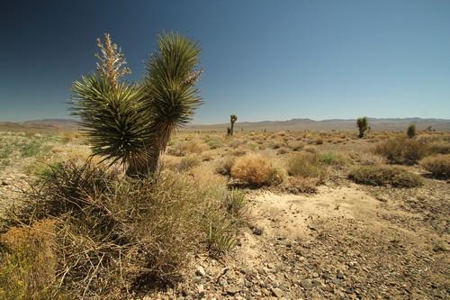 Death Valley (22)