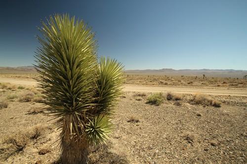 Death Valley (25)